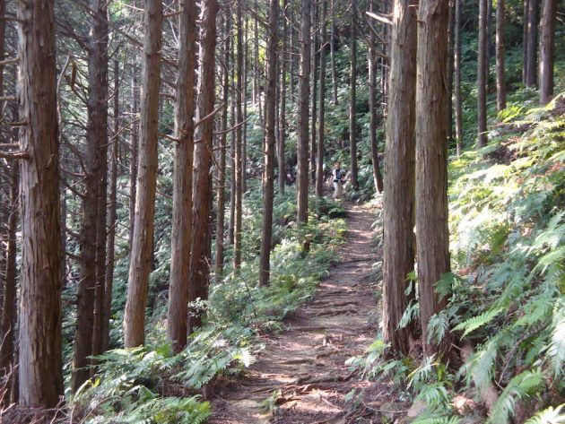 kumano-kodo-pilgrimage-path-forest