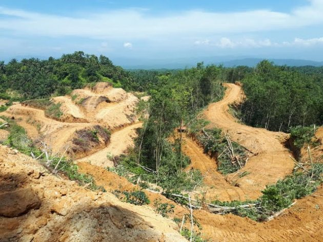 orangutan-wildlife-conservation-sumatra