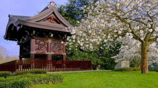 Kew gardens japanese