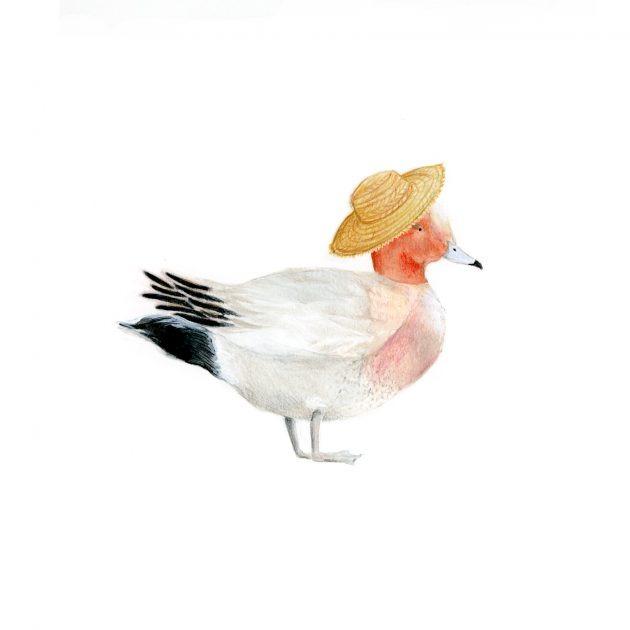 The Eurasian Wigeon
