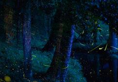 firefliesfeature